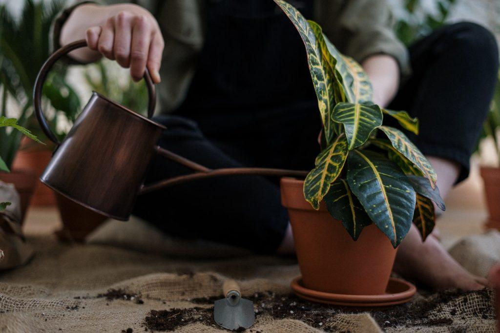 Personne qui arrose une plante